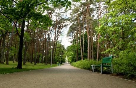 Bus pristatomas Alytaus miesto sodo teritorijos ir želdinių tvarkybos darbų projektas