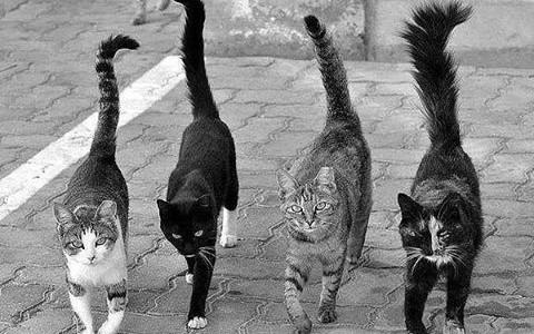 Katės – mūsų draugai ir priešai