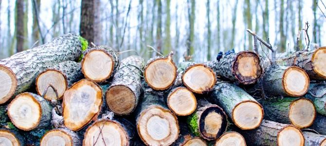 Pastebėjote Alytuje naikinamus medžius ? Praneškite!