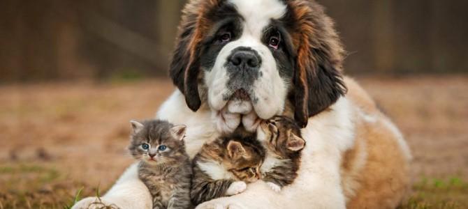 Šuo – draugas ar priešas