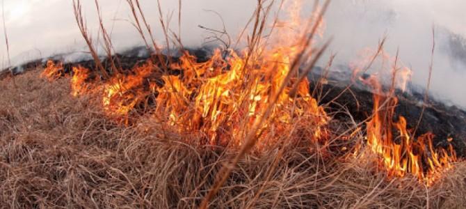 Net pandemija žalingų įpročių nesustabdo: nedeginkime žolės
