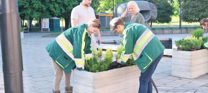 Labukas kuruoja gėlių sodinimą – ekonomika palauks