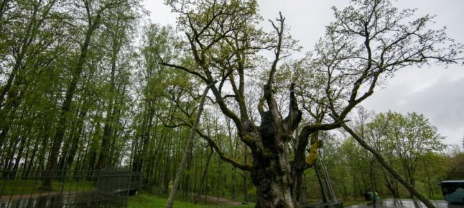 Aplankykite neseniai sutvarkytus ir atnaujintus gamtos paveldo objektus